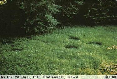 1976年06月28日_P0462#_拍摄于:Pfaffenholz, Hinwil_Semjase所驾光船的着陆痕迹