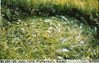 1976年06月29日_P0297#_拍摄于:Pfaffenholz, Hinwil_光船的辐射引发了草体的定向螺旋